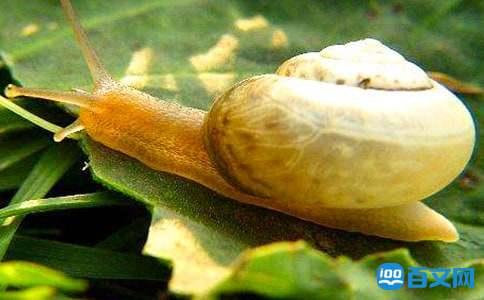 蜗牛的天空励志文章