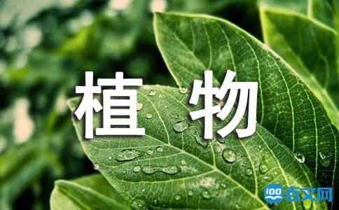 植物配置的基本原则